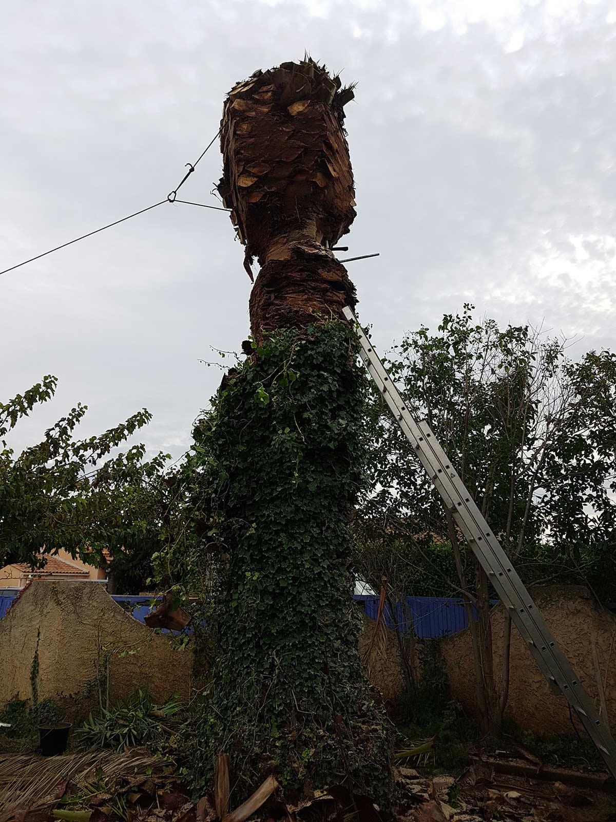 Abattage d'un palmier