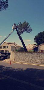 Abattage d'un pin haut dangereux, avec nacelle